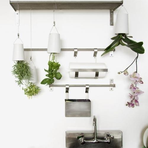Rośliny Do Góry Nogami Design Your Life
