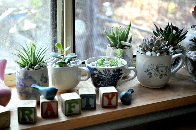 Rośliny w kubkach