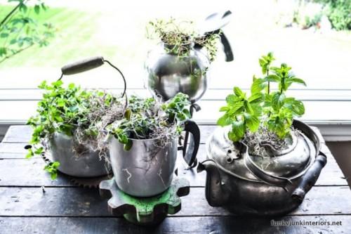 Roślinki w czajniku