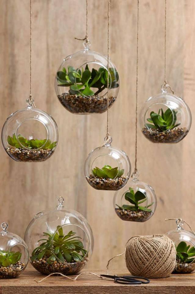 rośliny-w-domu